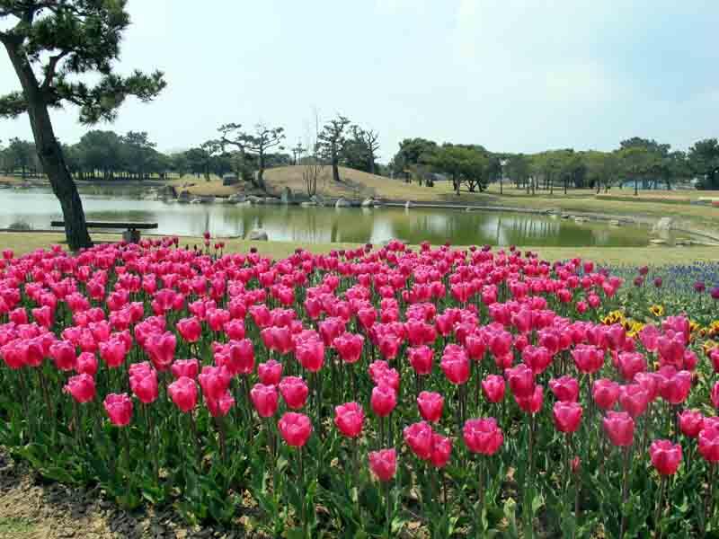 Fukuoka Uminonakamichi Seaside Park