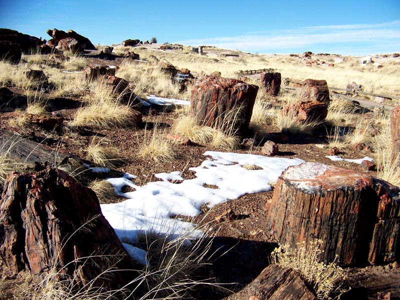Petrified Forest National Park (PFNP)