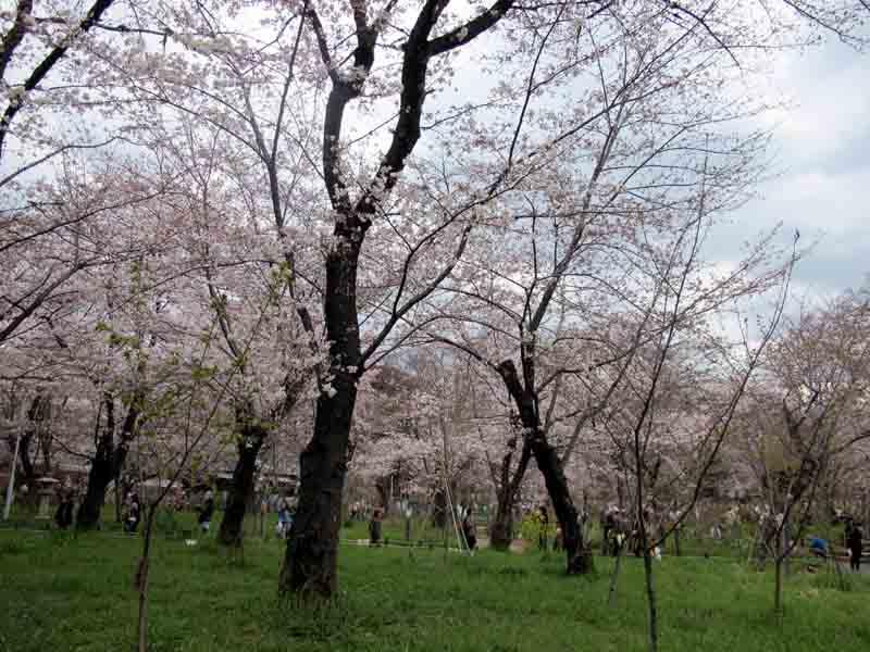 Kyoto Hirano Shrine