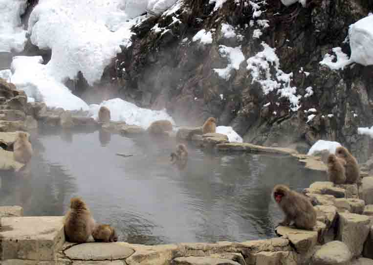 Nagano Snow Monkey Park