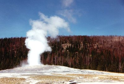 Yellowstone Nat'l Park