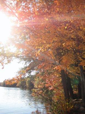 Fall's Blush