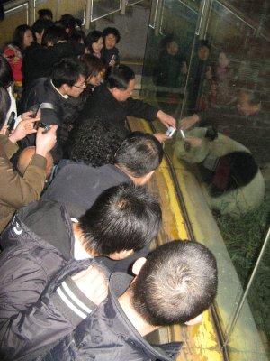 Chinese interviewing comrade Panda
