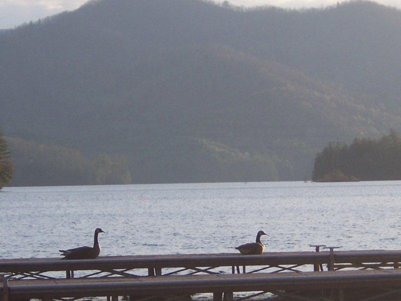 Blue Waters Geese
