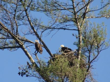 Eagles of Lake Santeetlah, NC
