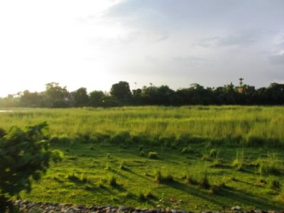 Great Views in Chitwan National Park
