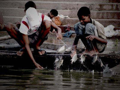 FISHING on the Ganges