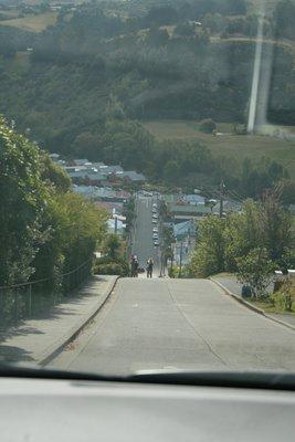 NZ_181.jpg