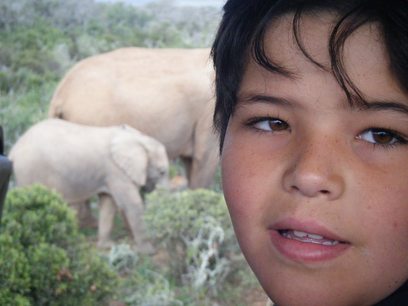 Addo national park South Africa eastern Cape.