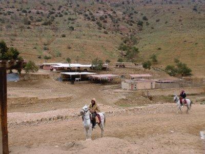 Horse Clinic, Petra