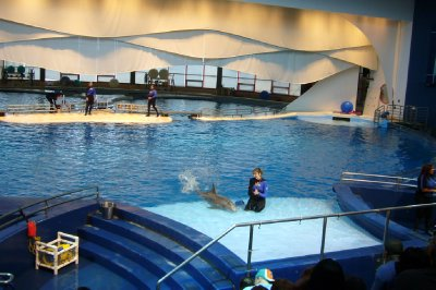 #1 National Aquarium Dolphin Show