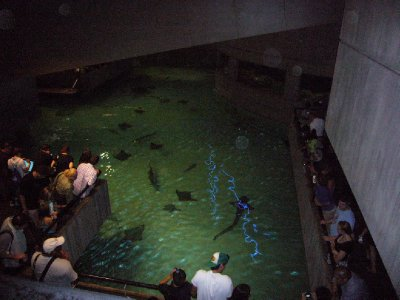 #2 National Aquarium StingRays Etc