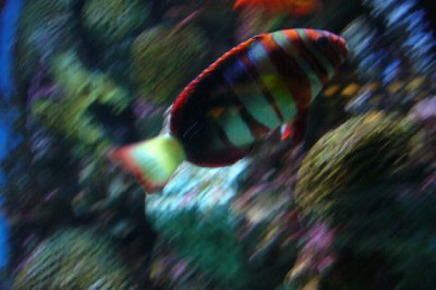 #3 National Aquarium Colorful Fish