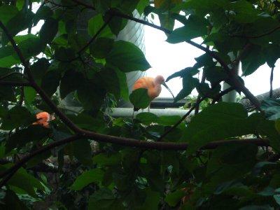 #5 National Aquarium Colorful Bird