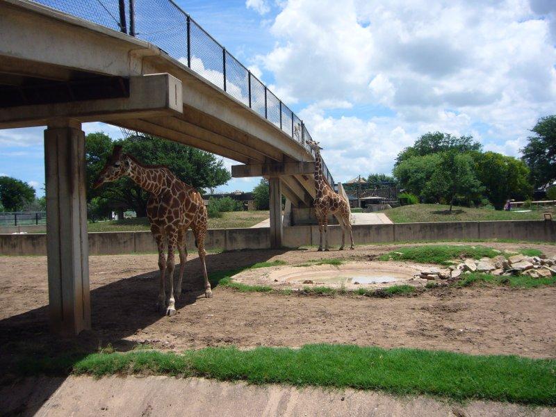 large_Abilene_Zo.._Bridge.jpg
