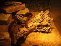 Abilene_Zoo_025.jpg