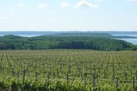 Vineyards_..raverse.jpg