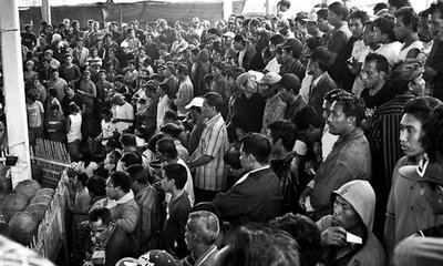 Cockfighting crowd