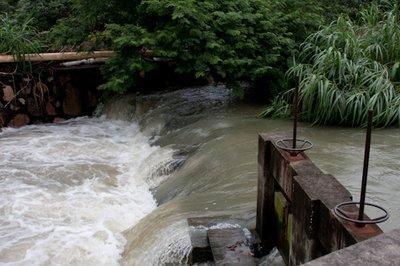 Lychee Farm Flooded