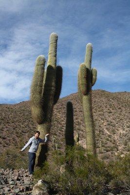 Giant Cactus