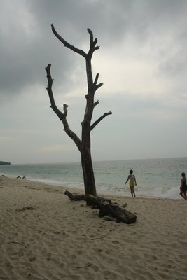Lonely tree still standing on the beach