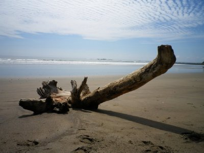 Lonely log on the beach