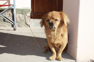 World's ugliest dog!