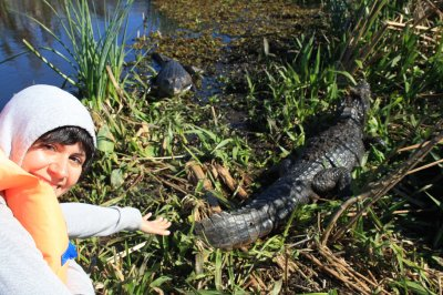 We could easily have touched the caimans...not sure if it would have been a good idea, but...