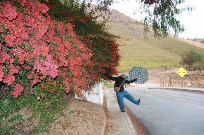 Rainman and roses