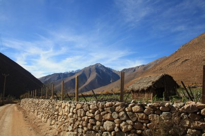 Wineyards and view
