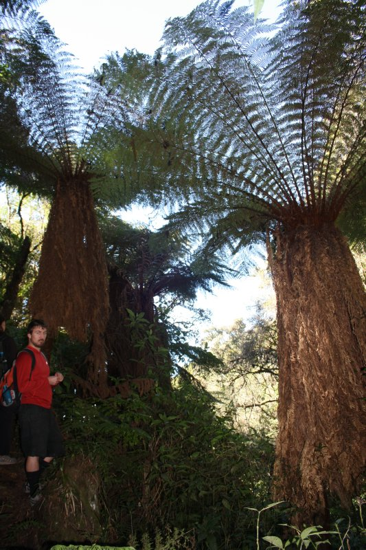 Henrik and some damn big fern plants