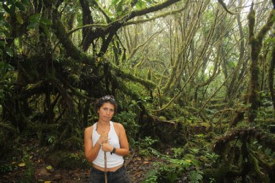 Laura posing in front of some cool forest covered in fog on the way up the volcano