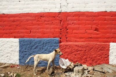 Nationalistic El Salvadorian dog saluting the flag by taking a dump next to it...