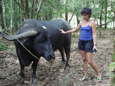 Making friends with a buffalo