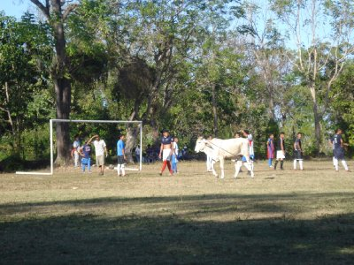 We went to see a local football game on Isla Omepete...the game got on hold when a cow entered the field