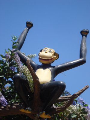 Happy monkey!