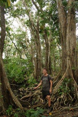 Mangrove swamp near Cauita