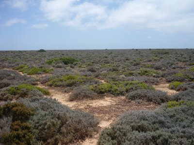 heathlands on the Nullarbor