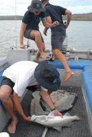 holding the catch - yuk!