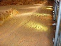 dinosaur footprints on the run