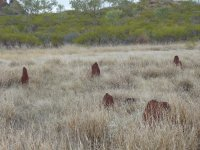 some termite mounds