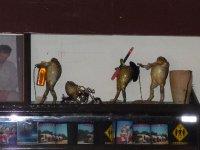 cane toads at Threeways roadhouse pub