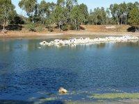 lake Wycliffe