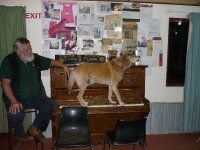 piano playing Dinky the singing dingo