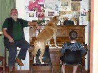 Dinky the singing dingo
