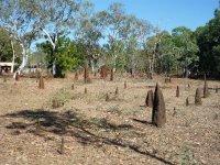 smallish termite mounds!