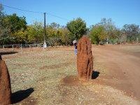 king termite found his mound!