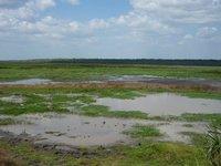 wetlands and birds