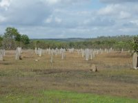 magnetic termite mounds - looks like a cemetery