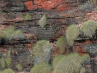can you see the rock wallaby?